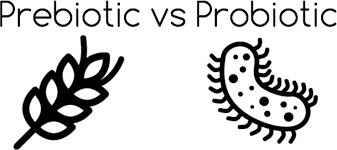 Phân biêt Prebiotics và Pribiotics