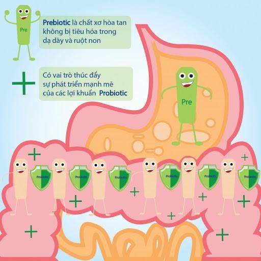 tầm quan trọng của Prebiotics với sức khỏe đường ruột